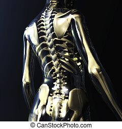 scheletro umano, illustrazione, digitale