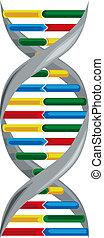 Scheme deoxyribonucleic acid. - Vector illustration of...