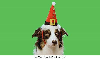 scherm, groene, kerstmis, dog
