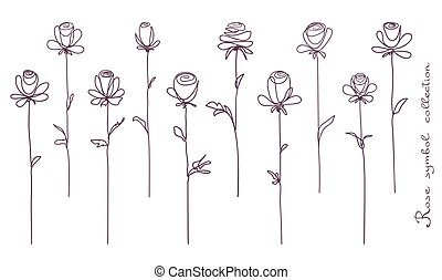schets, bloem, roos, vrijstaand, verzameling, roses., achtergrond, witte