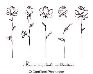 schets, bloem, vrijstaand, verzameling, roses., achtergrond, witte