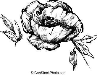 schets, bloemknop, peony