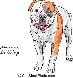 schets, bulldog, ras, dog, amerikaan, vector