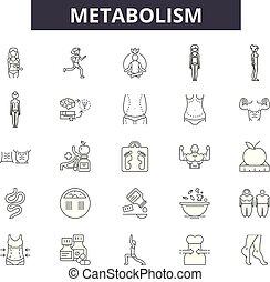 schets, metabolism, set, iconen, illustration:, vector., tekens & borden, lijn, metabolism, concept