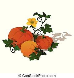 schets, rijp, halloween, alles, close-up., geesten, vrijstaand, day., achtergrond., witte , vakantie, pompoen, poster, kwaad, dieet, spotprent, kaart, gezonde , vegetariër, menu., dankzegging, vector, fitness, of