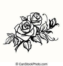 schets, roses., achtergrond, black , witte , tekening