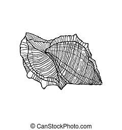 schets, schaal, schets, zwarte achtergrond, witte , hand-geverfd