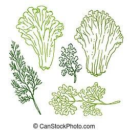 schets, voedingsmiddelen, illustratie, hand, vector, groene achtergrond, getrokken, witte
