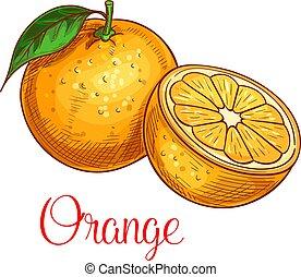 schets, vrijstaand, fruit, vector, sinaasappel, pictogram