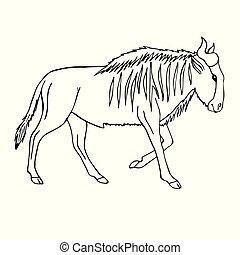 schets, wildebeest, hand, vector, black , getrokken, lijn