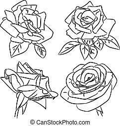 schetsen, rozen, witte , black
