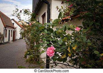 schilderachtig, straat, met, roos struik