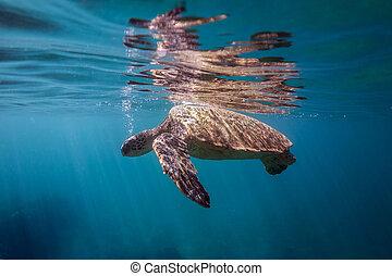 schildpad, ademhaling