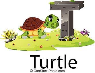 schildpad, goed, alfabet, dierentuin, animatie, t, dier
