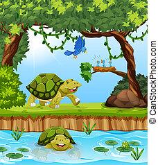 schildpad, in, de, jungle