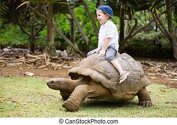 schildpad, paardrijden, reus