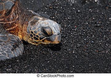 schildpad, punaluu, strand