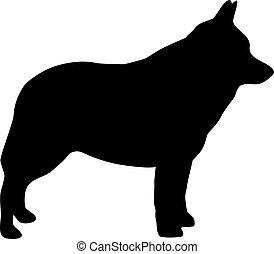 Schipperke silhouette black