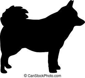 Schipperke silhouette in black