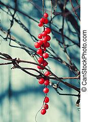 Schisandra berries against wooden blue desk, autumn natural...