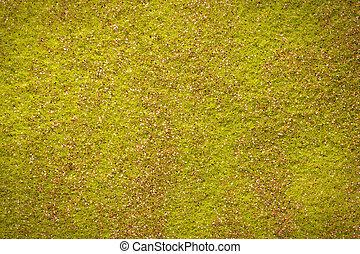 schitteren, vilt, groene achtergrond