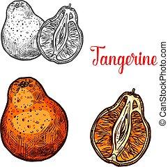schizzo, agrume, mandarino, mandarino, frutta, arancia