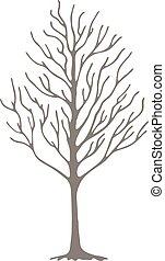 schizzo, albero., fioritura