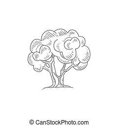 schizzo, albero, mano, realistico, oliva, disegnato