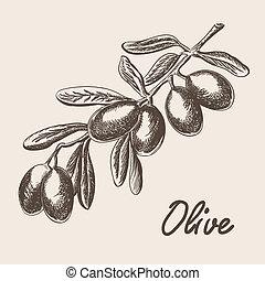 schizzo, albero, stile, illustrazione, mano, ramo, oliva,...