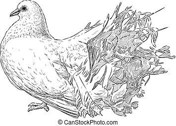schizzo, bianco, piccione