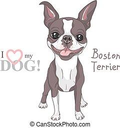 schizzo, boston, razza, cane, vettore, sorridente, terrier