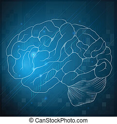 schizzo, di, uno, cervello umano