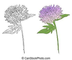 schizzo, fiore, burdock, disegno, vettore, botanico