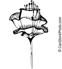 schizzo, fiore, nero, bianco