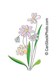 schizzo, fiori