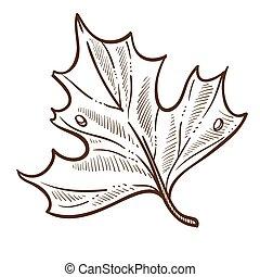 schizzo, foglia, natura, stagione, albero, isolato, autunno, cadere