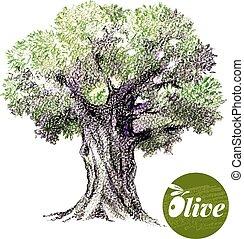 schizzo, illustration., albero, mano, vettore, oliva,...