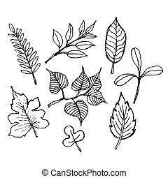 schizzo, illustrazione, di, foglia, disegno