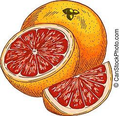 schizzo, isolato, frutta, vettore, arancia, rosso, icona