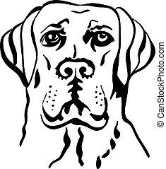 schizzo, labrador, razza, cane, vettore, cani riporto