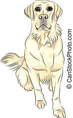 schizzo, labrador, seduta, colorare, razza, cane, vettore, bianco, cani riporto