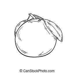schizzo, mandarino