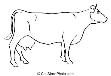 schizzo, mucca
