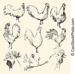 schizzo, set, galli, mano, vettore, disegnato