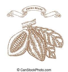 schizzo, stile, illustrazione, mano, cacao, vettore, fagioli, disegnato, branch.
