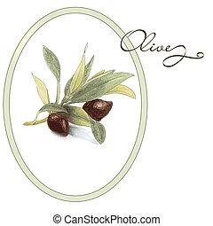 schizzo, stile, mano, vettore, disegnato, oliva, branch.