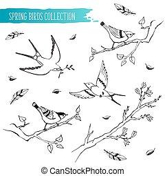schizzo, uccelli, collezione
