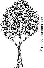 schizzo, vettore, illustrazione, albero., nero, bianco