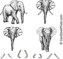 schizzo, vettore, set, elefante, icona