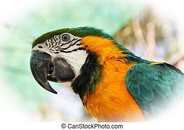 schlagend, nahaufnahme, porträt, bild, von, bunter , macaw,...